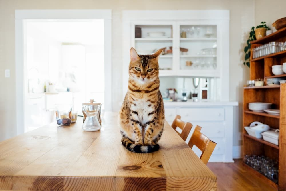 is dry food for cats better than wet food