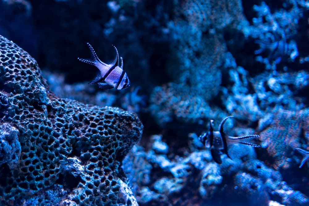 is it hard to maintain a saltwater fish tank