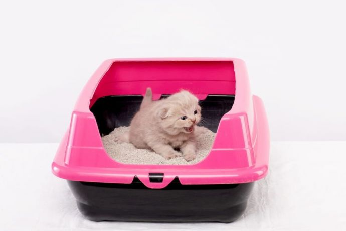 keep cat litter box clean