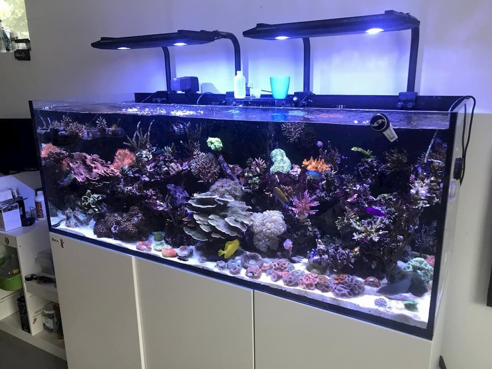 kessil ap700 led aquarium light set up photo