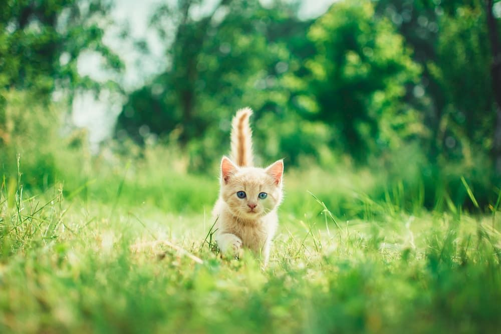 kitten first visit to vet