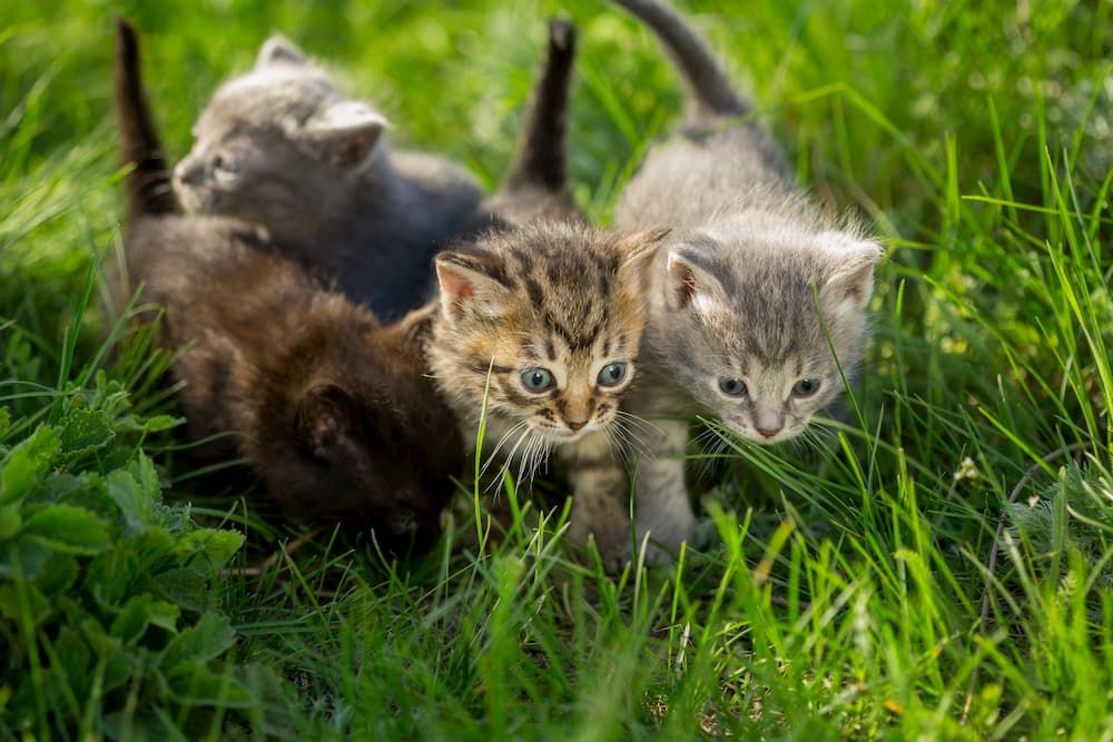 kittens feeding