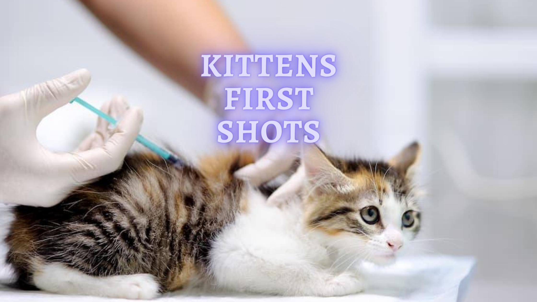 Kittens First Shots When Do Kittens Get Their First Shots