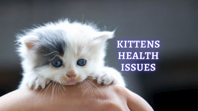 kittens health issues