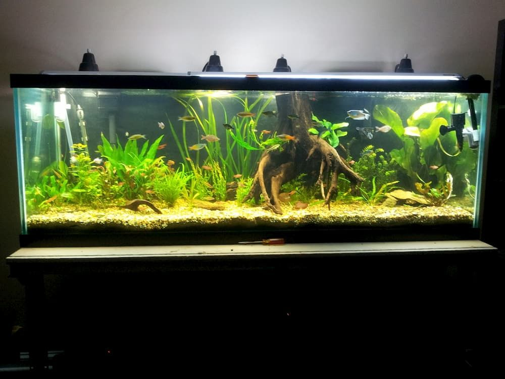 lighting example for 180 gallon tank