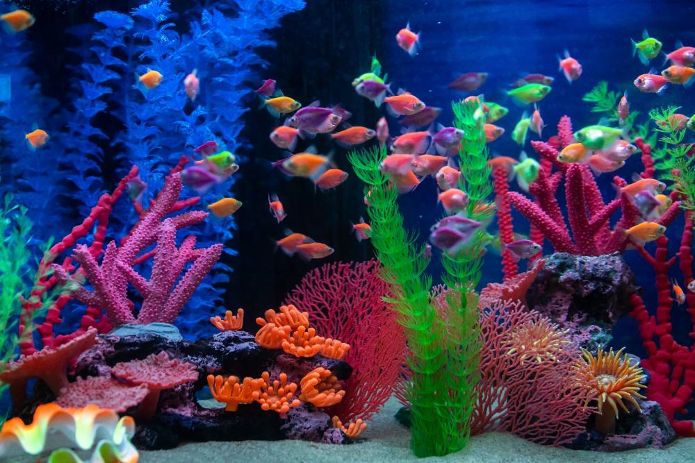 make a mini aquarium