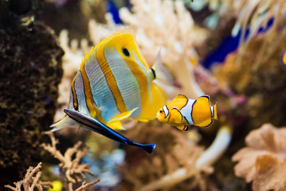 mini aquariums