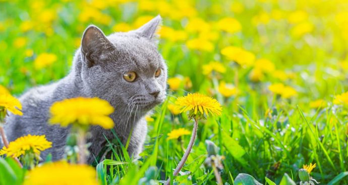 Does My Cat Have Allergies and What Can I Do About Them?