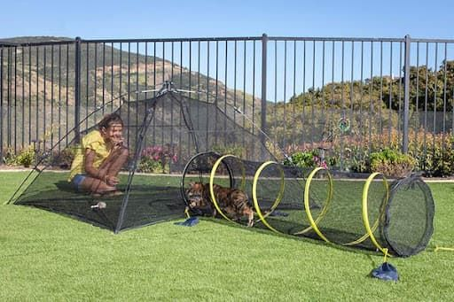 outback jack pop-up playground for cats
