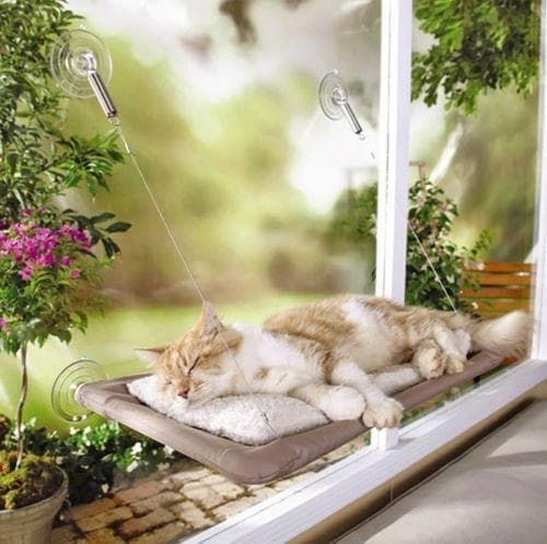 pet paw joy cat window perch