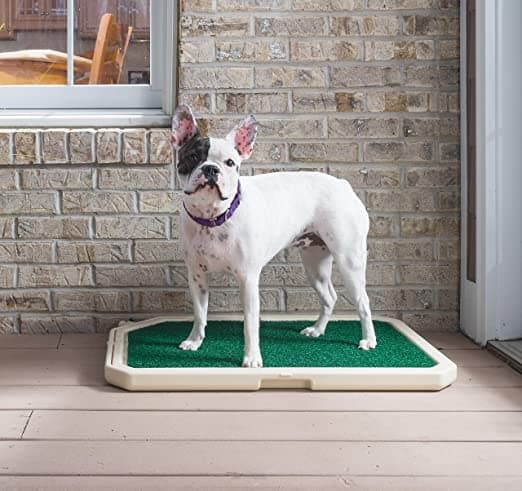 piddle place indoor dog and cat toilet with cover