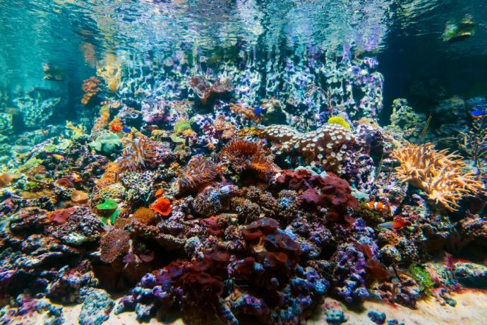 Most Popular Saltwater Aquarium Fish