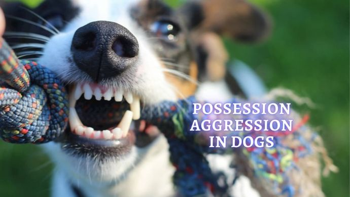 possession aggression in dogs