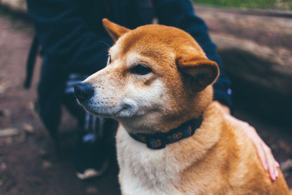 prevent dog vomiting