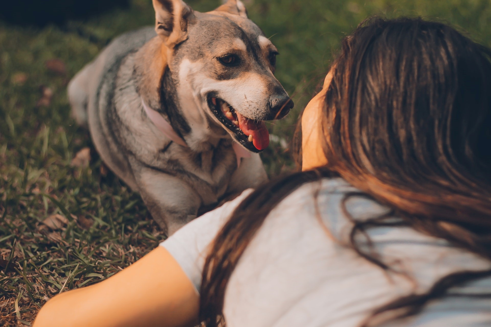 pros and cons of neutering your male dog