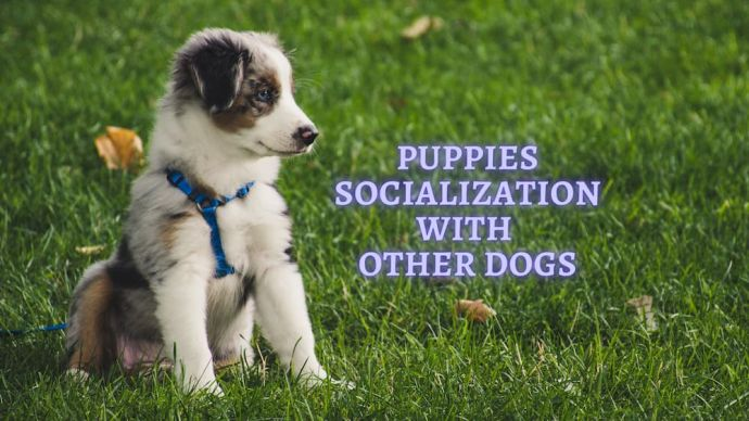 puppies socialization with other dogs