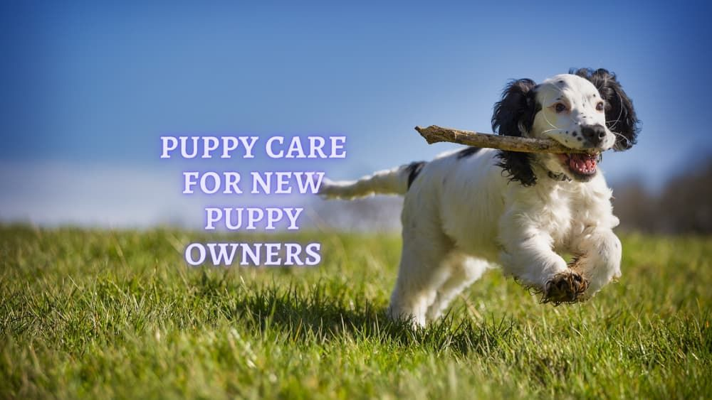puppy care 101 what to know about puppy care