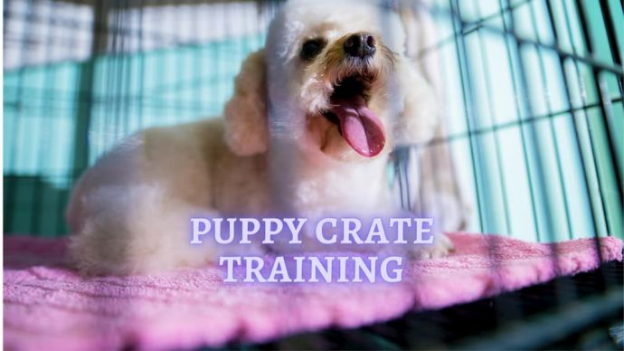 puppy crate training advice