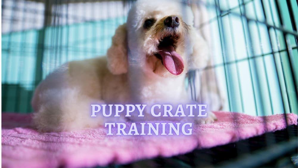 puppy crate training advice