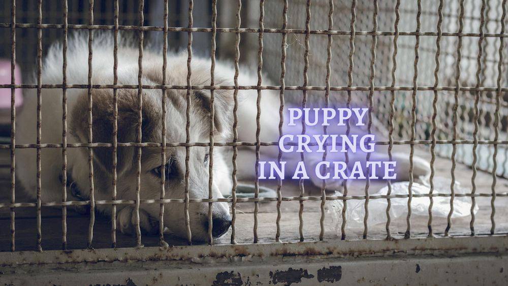 puppy crying in a crate