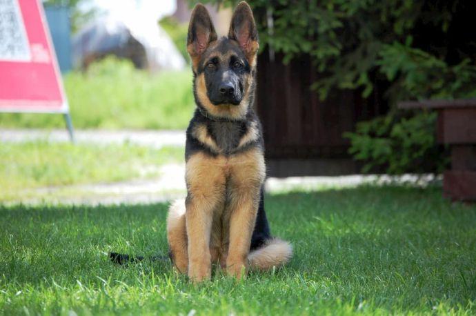 puppy pad training