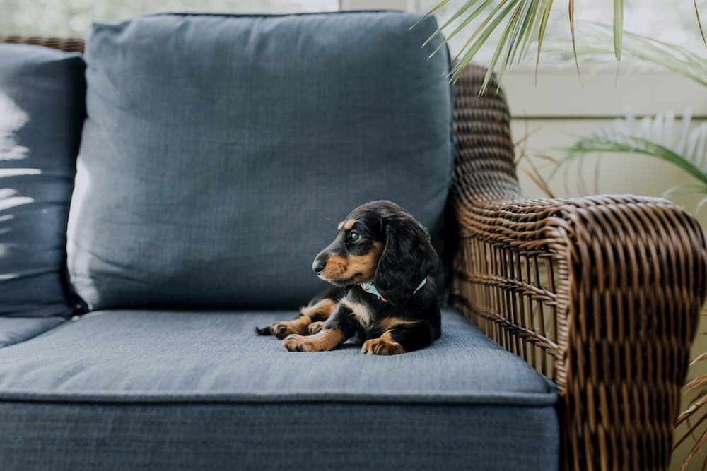 puppy proofing home