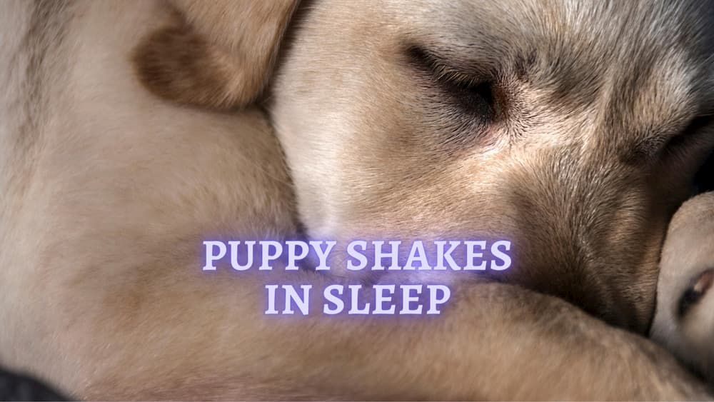 puppy shakes in their sleep