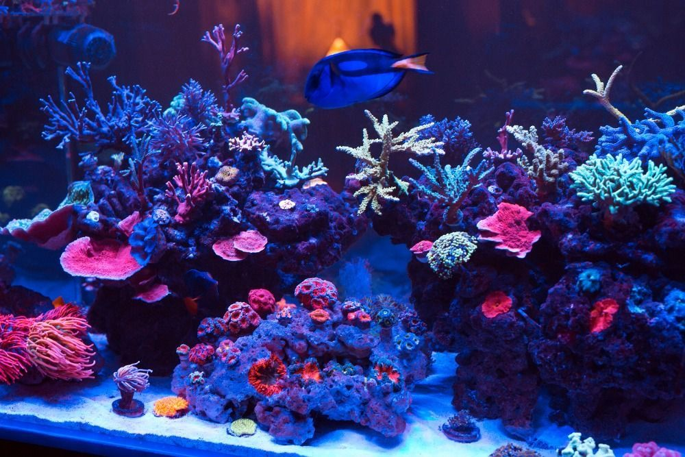 refugium for a saltwater aquarium