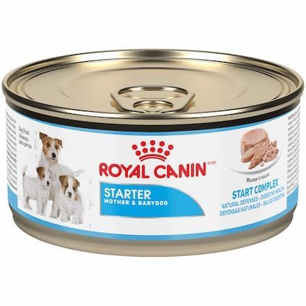 royal canin starter mousse mother baby dog