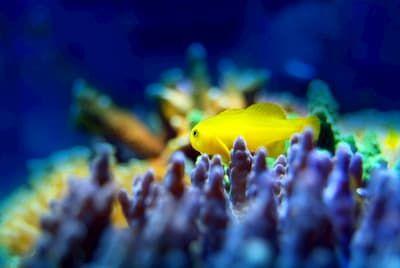 saltwater aquarium refugium