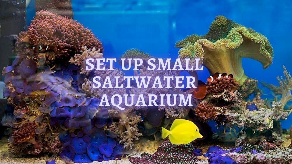 set up small saltwater aquarium
