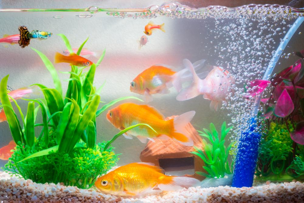 setting up a freshwater aquarium