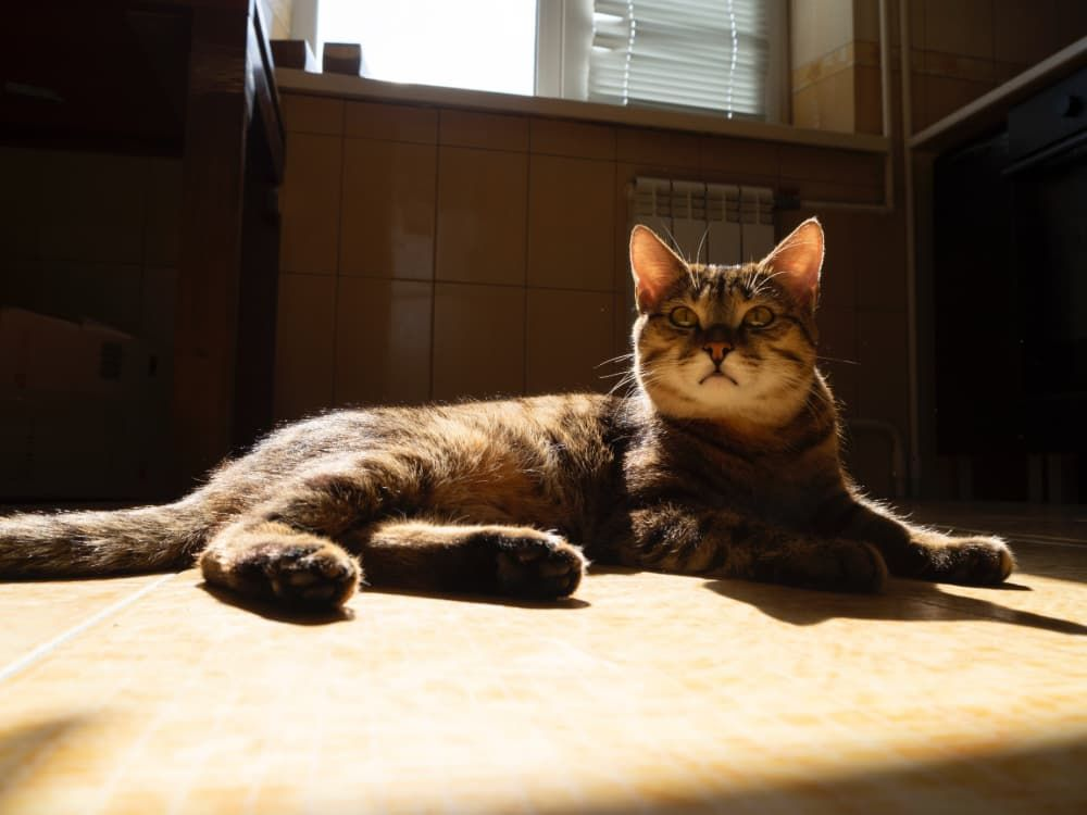 side effects of worm medications in cats