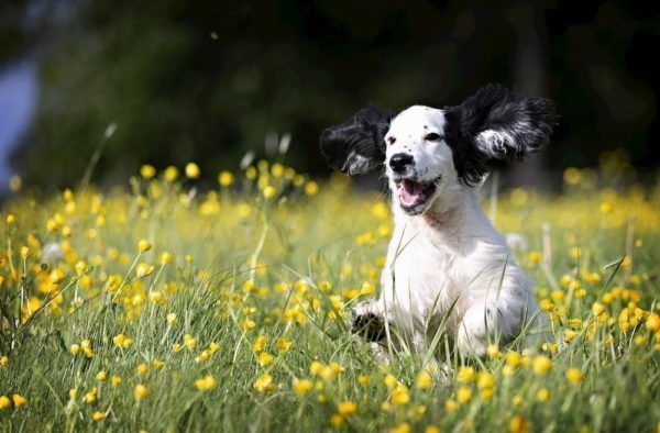 signs of allergie in dogs