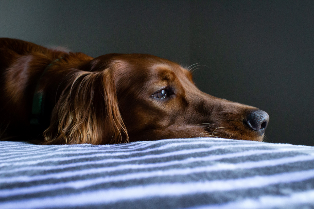 signs of poisoning in dogs symptoms