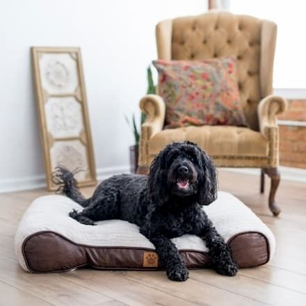 snoozzy orthopedic sleigh pet bed