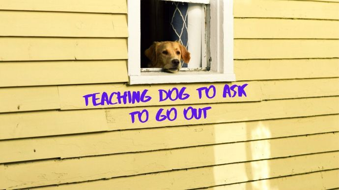 teaching dog to ask to go out