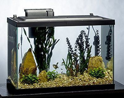 tetra 20 gallon complete aquarium kit with filter heater led and plants
