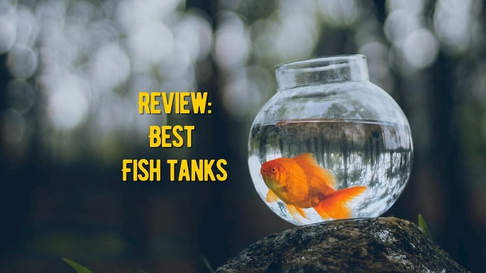 the best fish tanks review