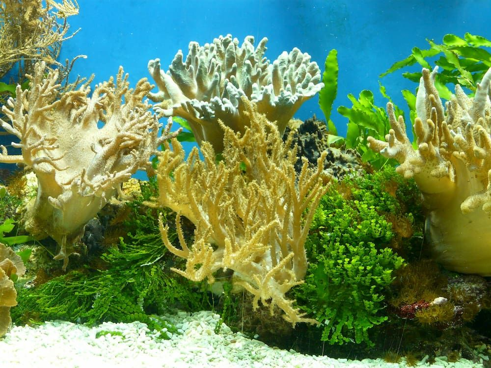 things to consider before buying aquarium substrate