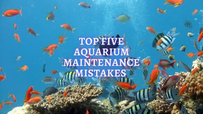 top five aquarium maintenance mistakes