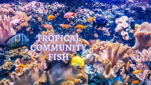 tropical community fish tank