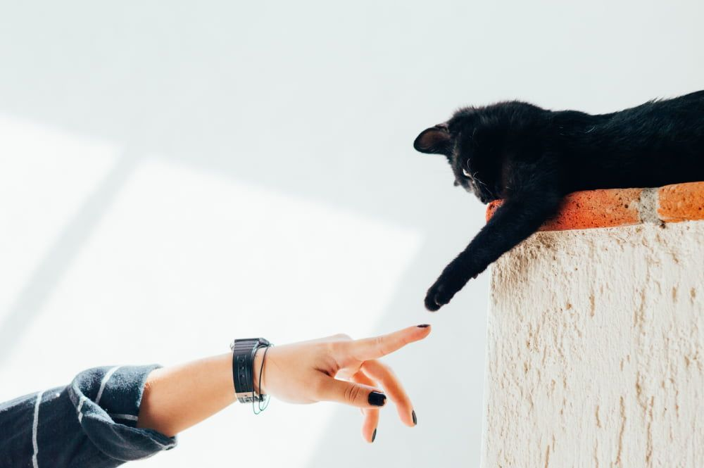 two-person method for restraining a cat for a nail clipping