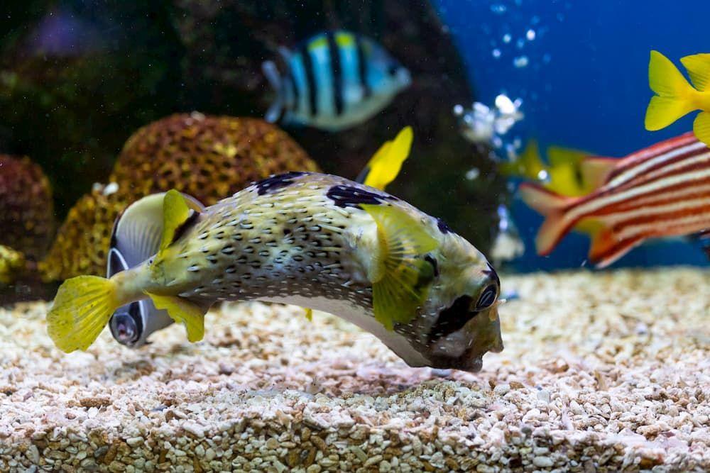 types of aquarium substrates