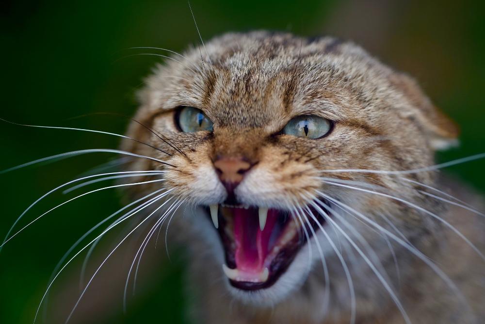 types of teeth do kittens
