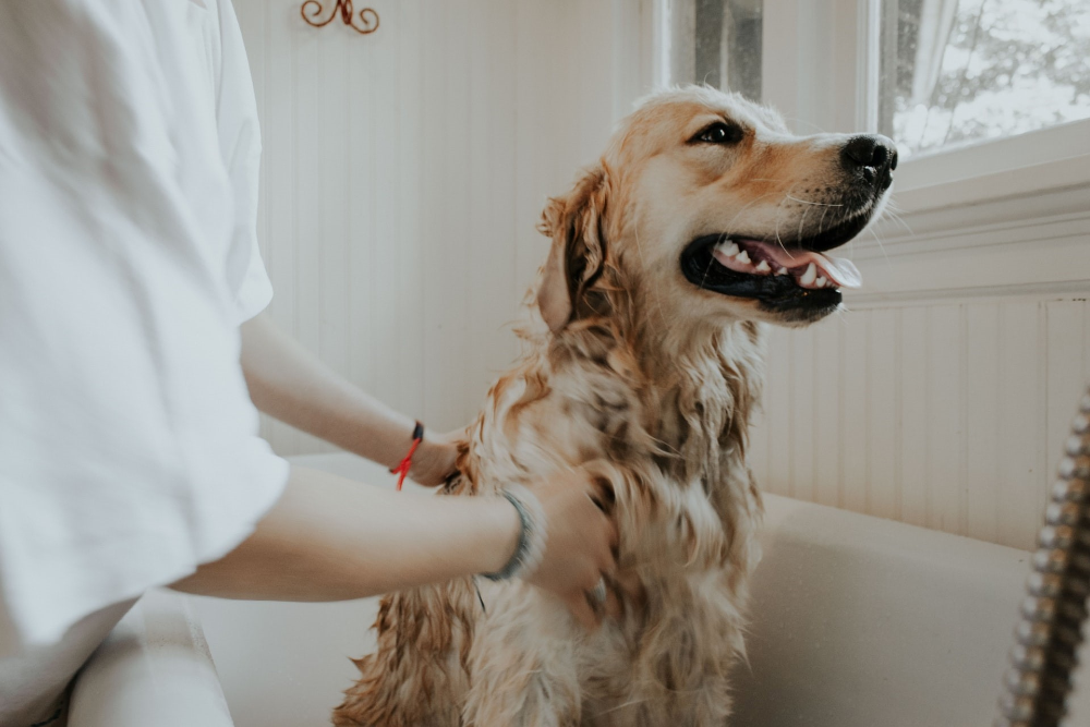 vet stem cell therapy for dogs