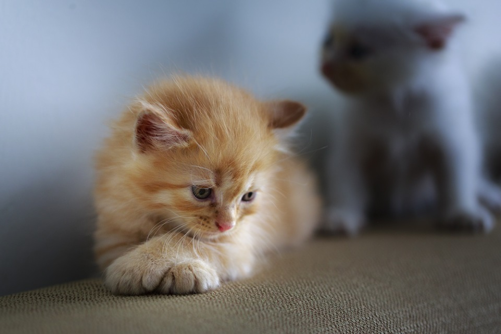 what are the symptoms of a sick cat