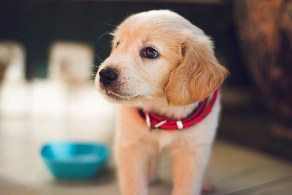 what causes kidney disease in dogs