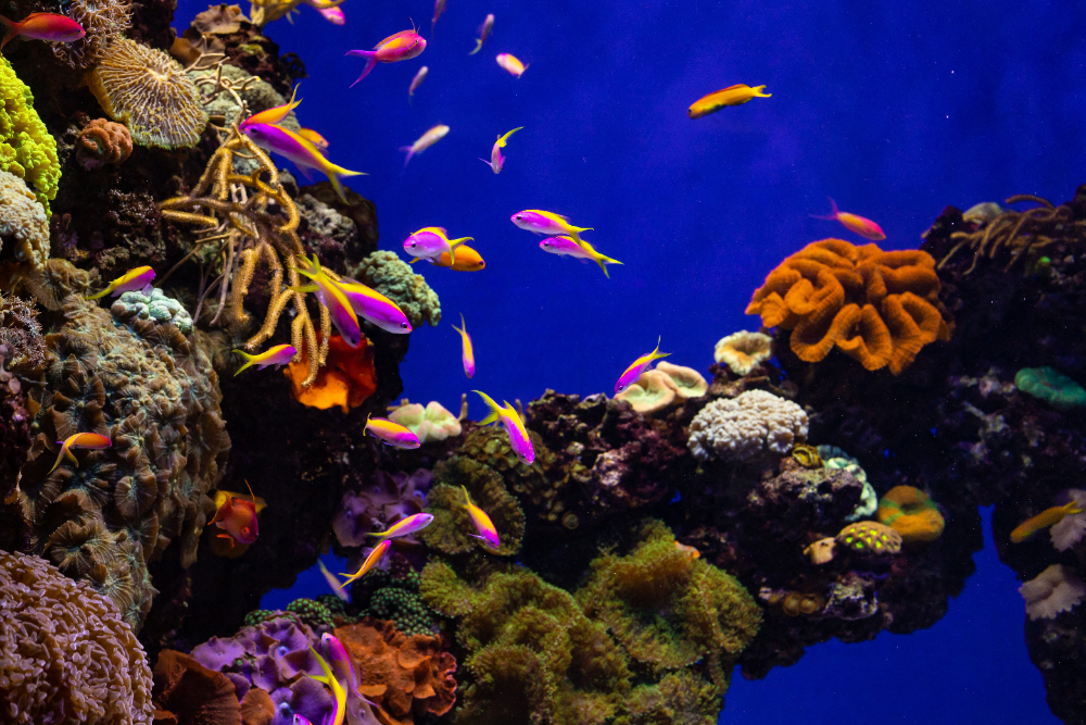 what do you need for a saltwater aquarium