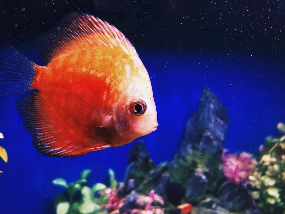 what if aquarium temperature is too low